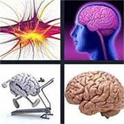 Brain Renewal